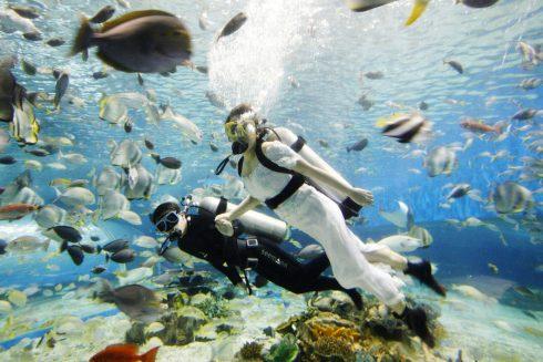 Dans un aquarium a Manille Philippines