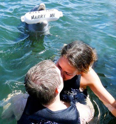 demande en mariage dauphins